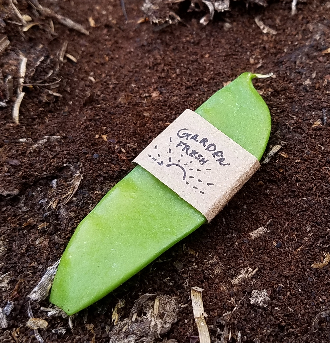 "Photograph of a peapod with a label handwritten on brown paper. The label says ""Garden Fresh"" and has a picture of a sun."